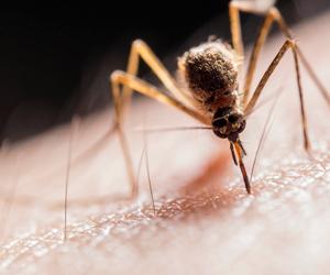 Muggen verjager